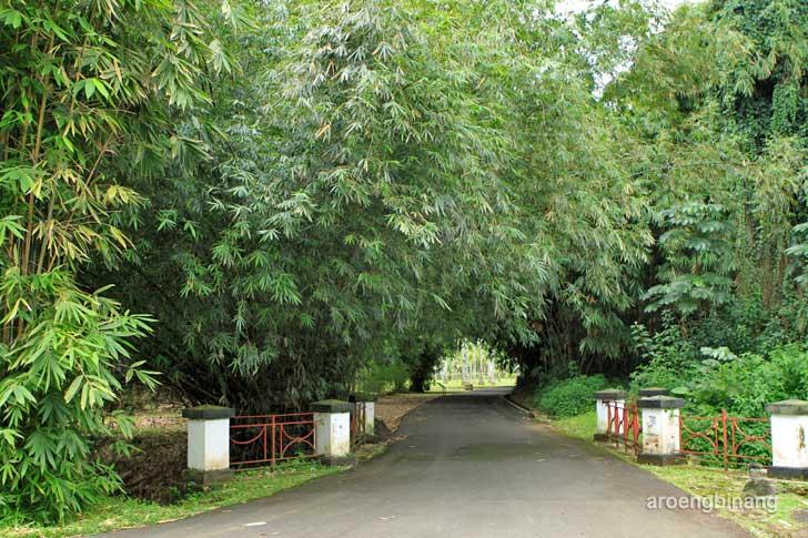 hutan bambu kebun raya bogor