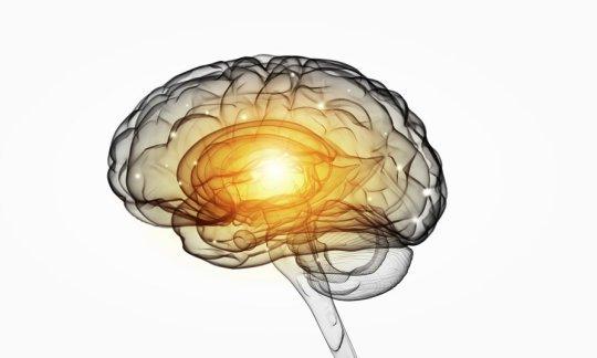 Brain and LTM