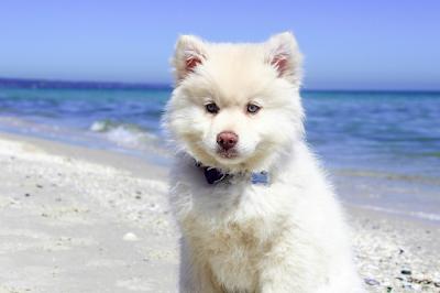Italian Dog Breeds, Italy Dog Breeds