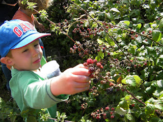 milton common reclaimed land blackberry picking