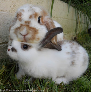 Two sweet bunnies.