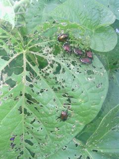 Quién se come mis plantas - Guía para controlar las plagas mas comunes del huerto - 3