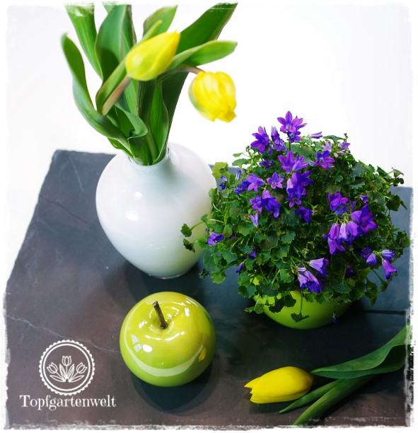 Gartenblog Topfgartenwelt Valentinstag: gelbe Tulpen und blaue Glockenblumen als perfekte Kombination für den Frühling