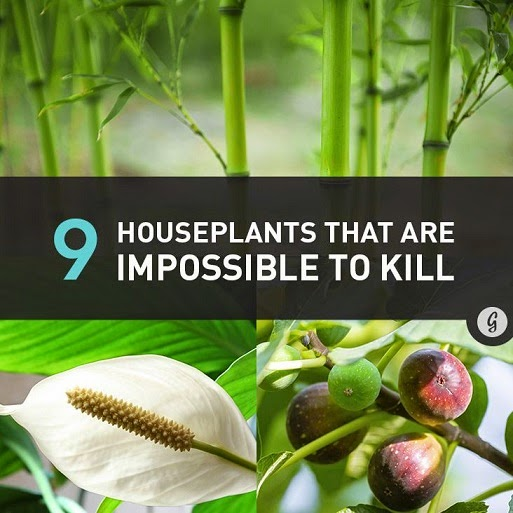 Houseplants That Are Almost Impossible to Kill #Plants
