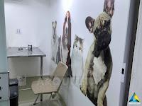 projeto arquitetura petway pet shop consultório veterinário pequeno