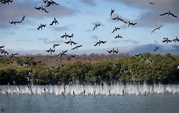 مجموعة من غرائب وعجائب الصور المذهلة تم تصويرها بواسطة مصوروا الحياة الطبيعية