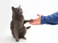 Bahasa Tubuh Kucing Apa yang Dia Mau, Pecinta Kucing Perlu Tahu Ini!