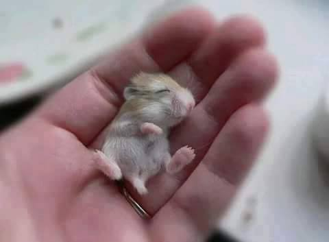 Look at his face, cute mouse