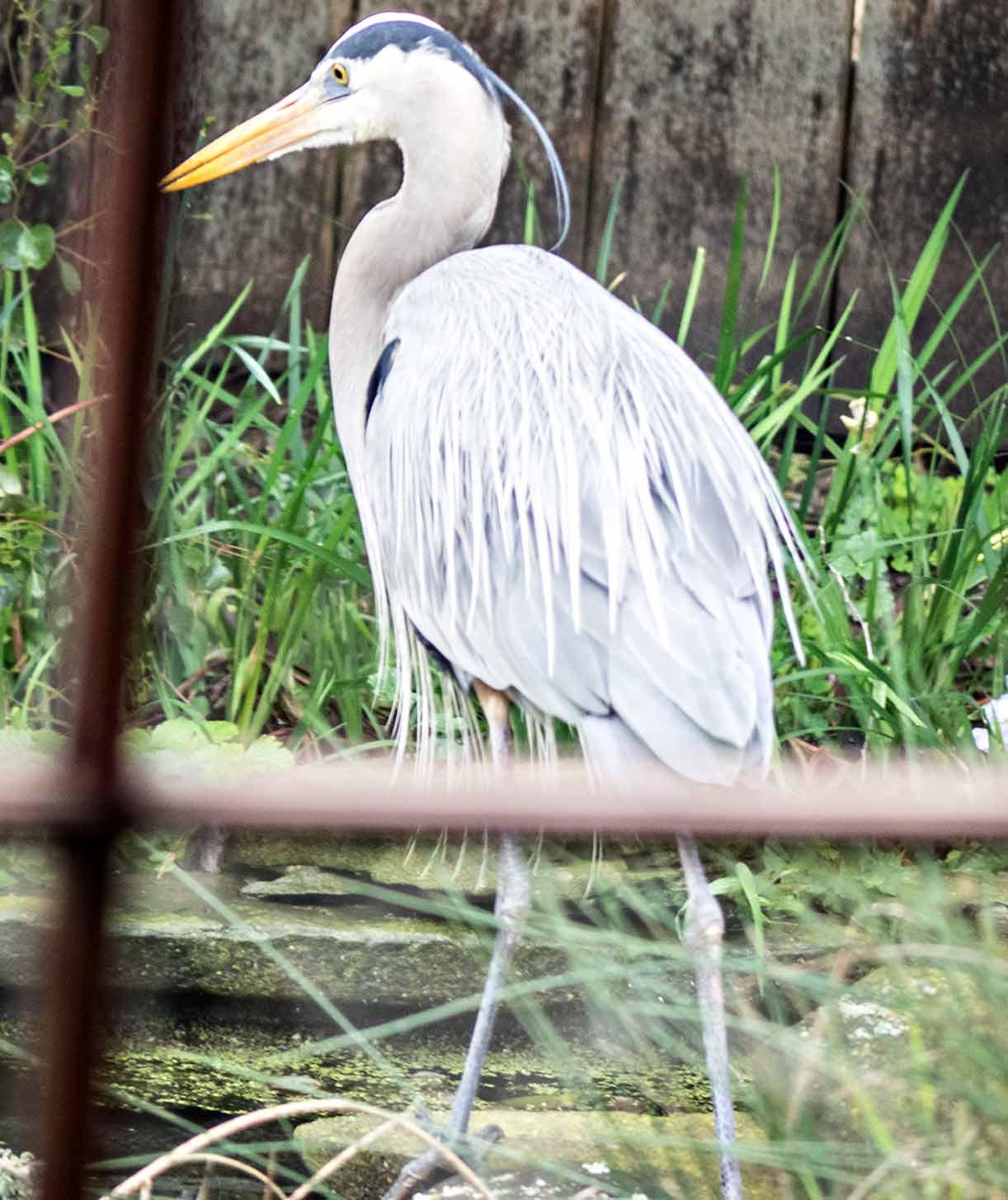 d3aca586a9e84 Majestic birds ...