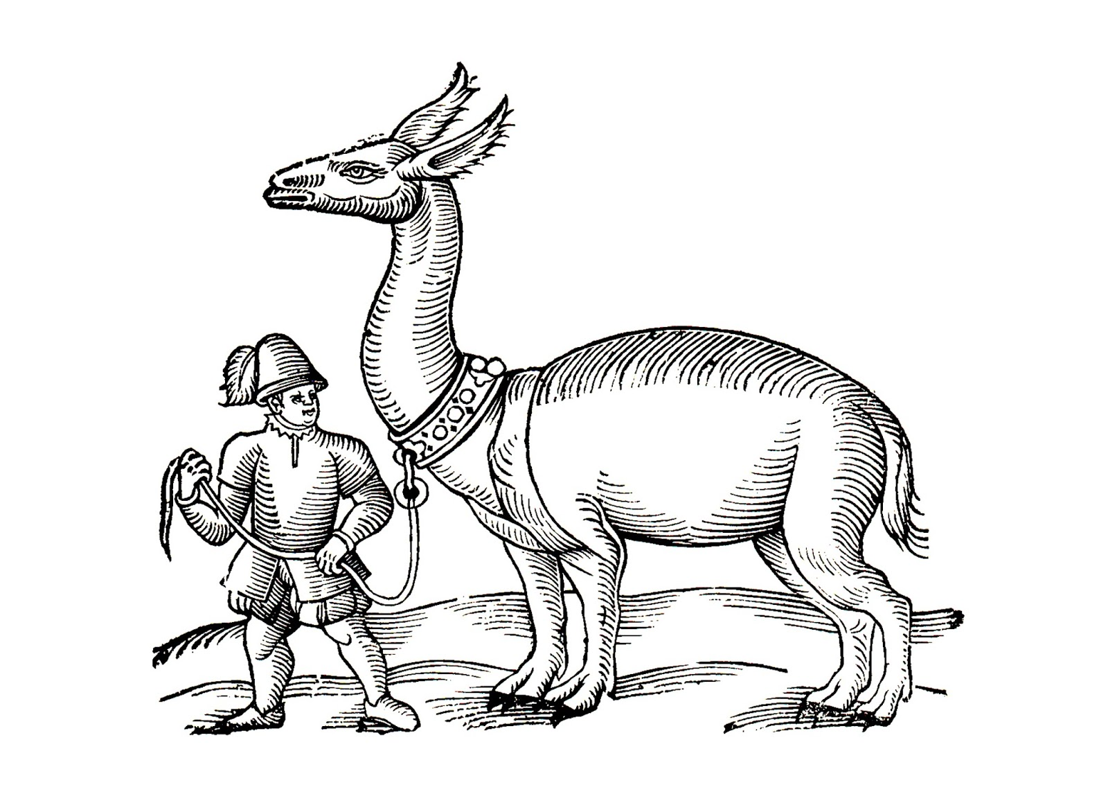 the llama or allocamelus as depicted in edward topsells bestiary the history of four footed beasts and serpents 1658 public domain