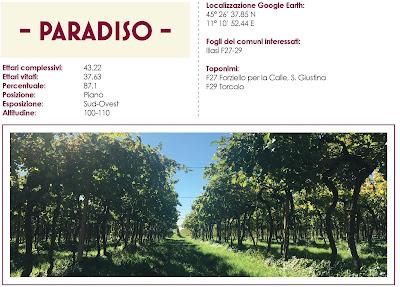 paradiso vino