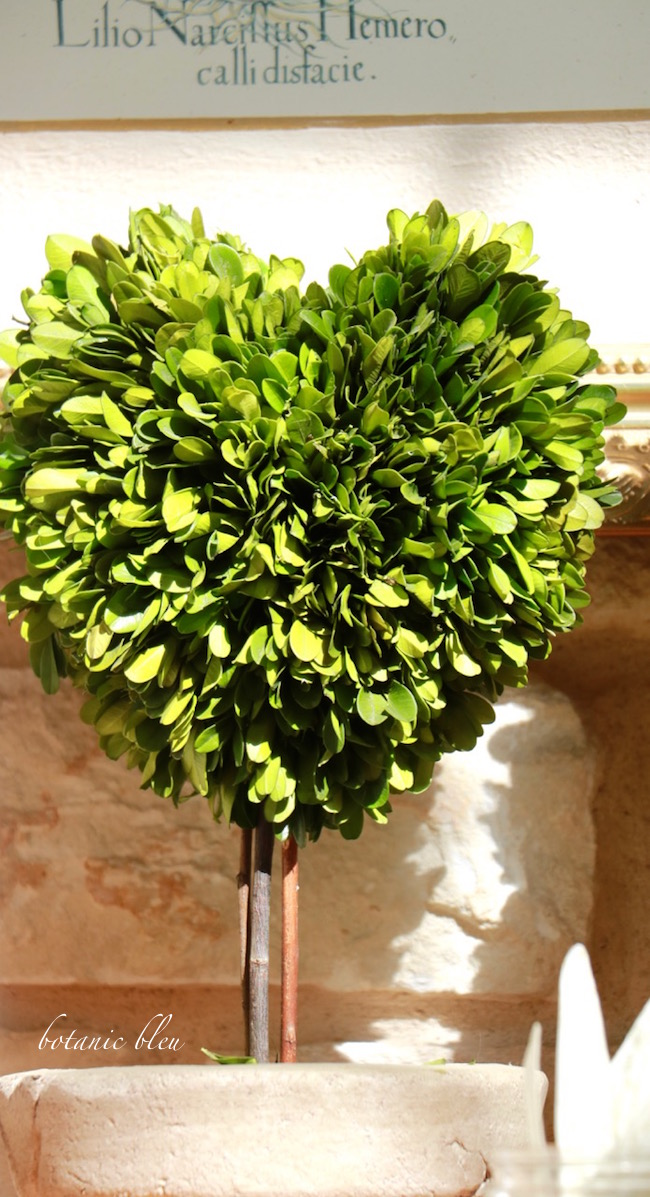 heart-shaped-preserved-boxwood-topiary