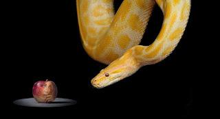Snake-1322240_960_720
