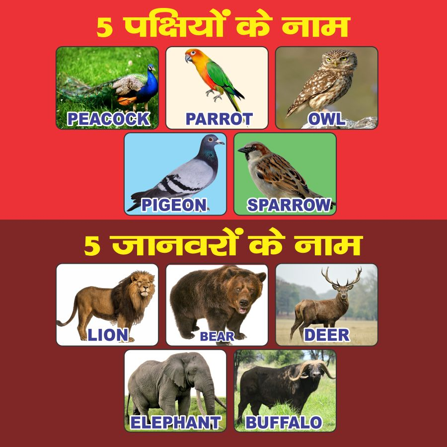 Birds Name In Hindi And English With Pictures - Famous Bird 2017