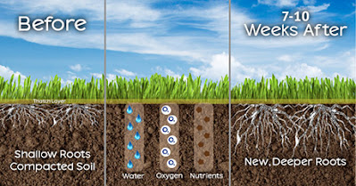 lawn aeration, when is the best time to aerate lawns,best month to aerate lawn,what does lawn aeration do,when should lawns be aerated,why aerate your lawn,aerate or fertilize first,steps to aerate your lawn,does aerating a lawn work,do you need to aerate your lawn every year,how often do you need to aerate your lawn,aerate lawn,how to aerate lawn,when to aerate lawn,aerating lawn,aerator lawn,best time to aerate lawn,when is the best time to aerate your lawn,when should you aerate your lawn,why aerate lawn,when to aerate your lawn
