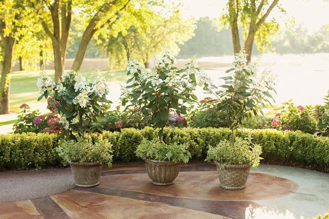 Hortensia - AGM - Hydrangea paniculata Pinky-Winky ('Dvppinky')