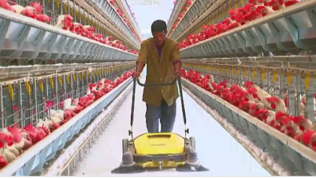 advantages of animal husbandry, animal husbandry introduction,  importance of animal husbandry, dairy farming,  importance of animal husbandry, cattle farming