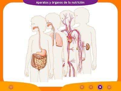 http://ceiploreto.es/sugerencias/juegos_educativos_6/1/1_Aparatos_organos_nutricion/index.html