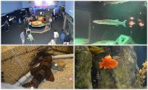 Hotels Near Mystic CT Aquarium