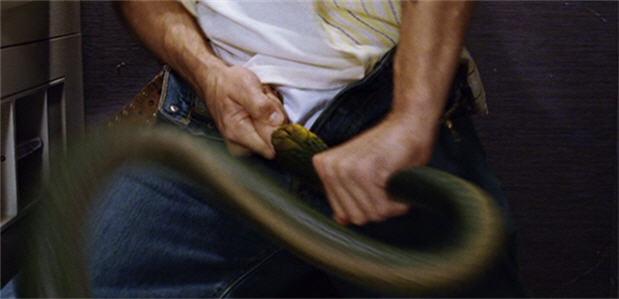 Snake Bitten Cock In A Pot