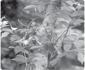 Tumbuhan yang Mendekati Kepunahan (Langka)
