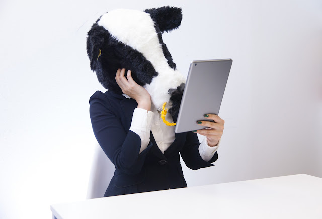 独自ドメインの導入に悩む牛