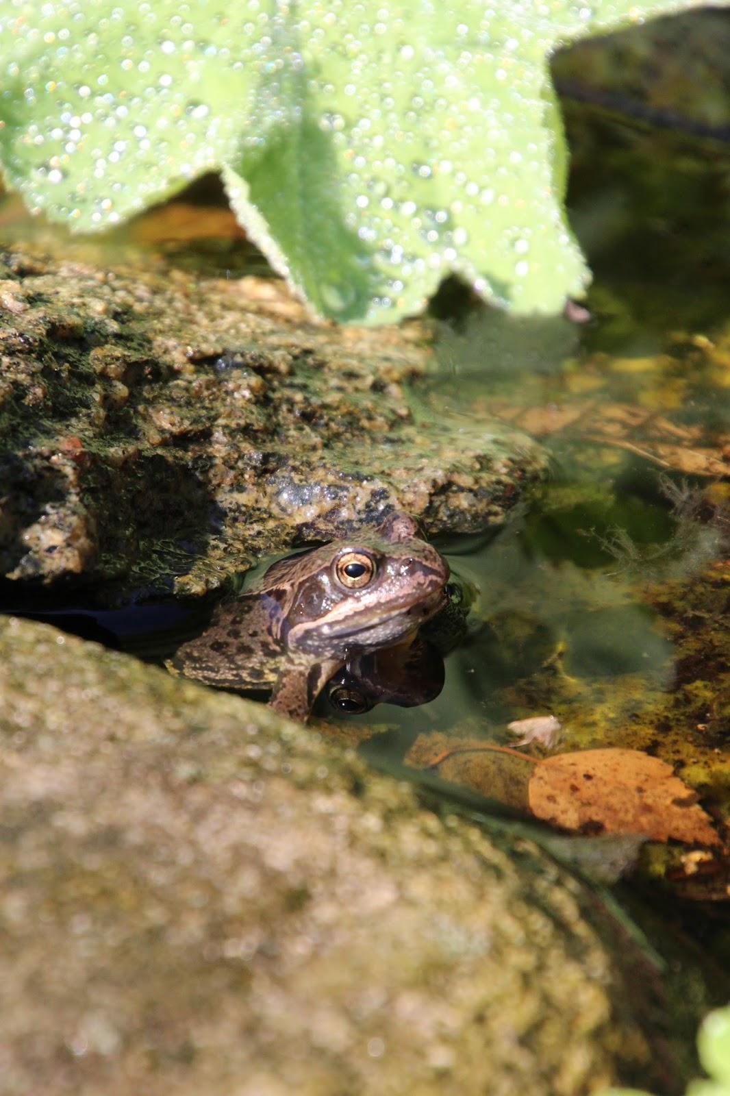 grodor i trädgården