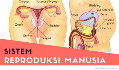 Penyakit - penyakit pada sistem reproduksi manusia - berbagaireviews.com