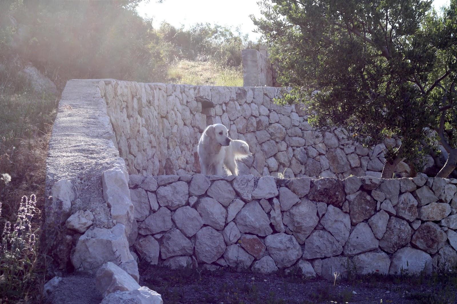 Tamino in kroatischem Morgenlicht