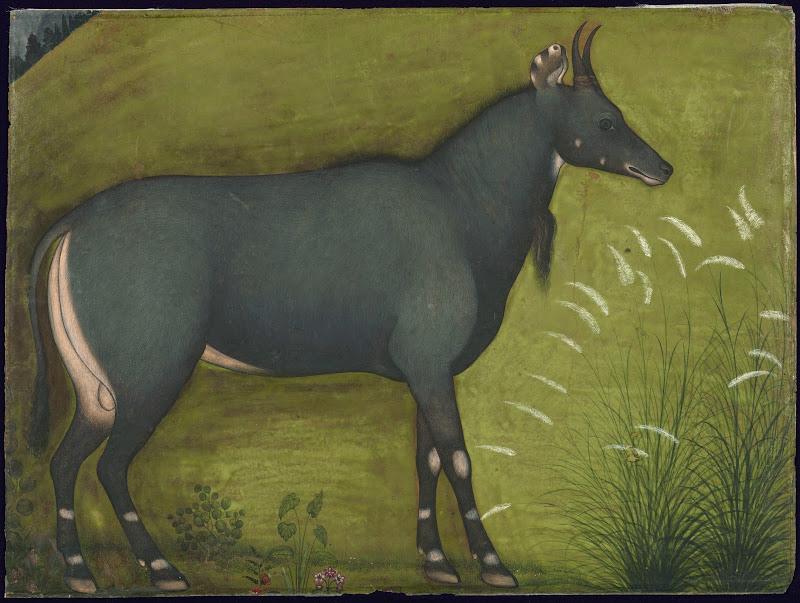 Illustration of a Nilgai (Boselaphus tragocamelus) - Mughal Painting, Circa 1640