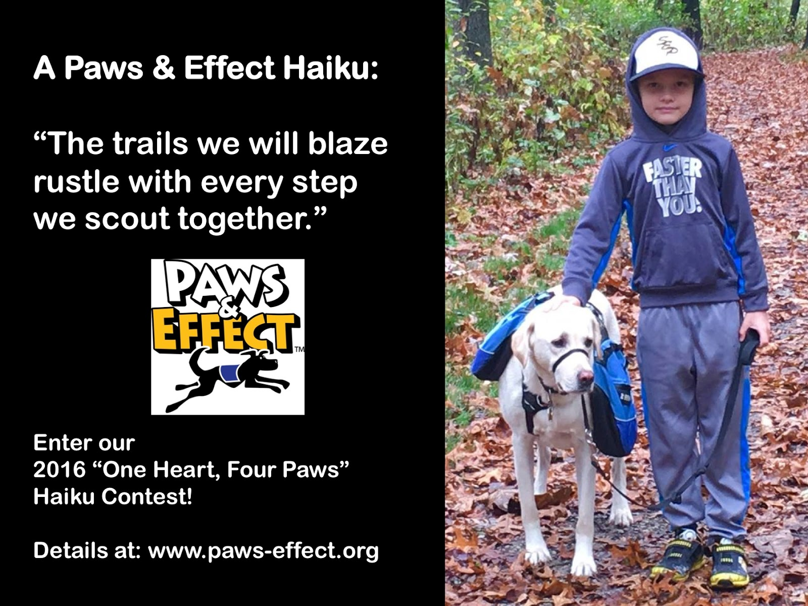 Blog — Paws & Effect