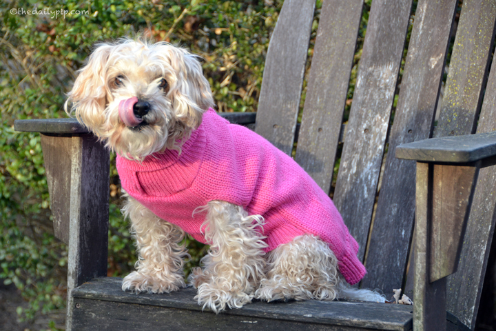 Ruby models her pink doggie sweater