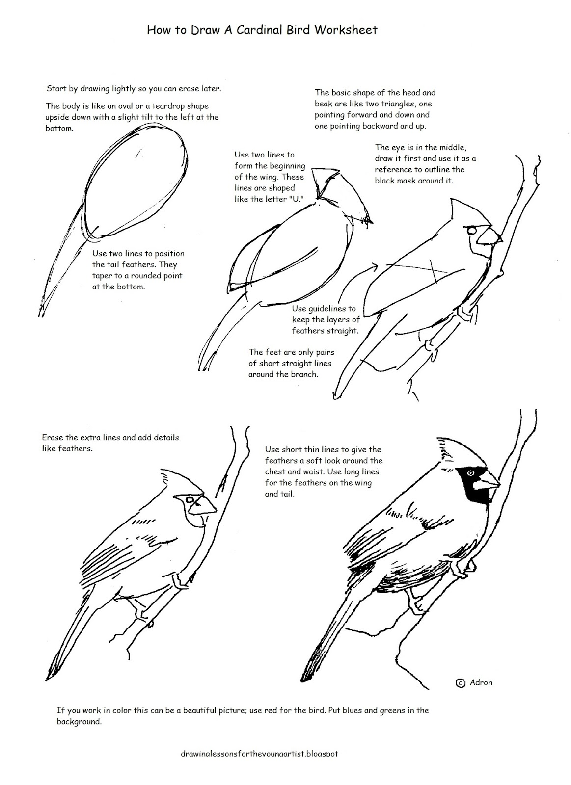 Uncategorized Bird Worksheets how to draw worksheets for the young artist a cardinal bird worksheet