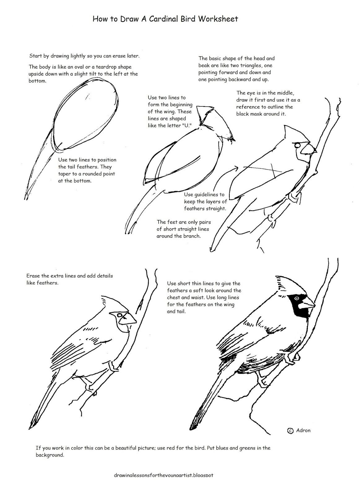 How To Draw A Cardinal Bird Worksheet