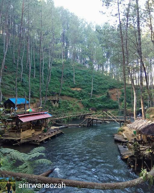 kawasan-hutan-pinus-rahong-pangalengan-kampung-singkur