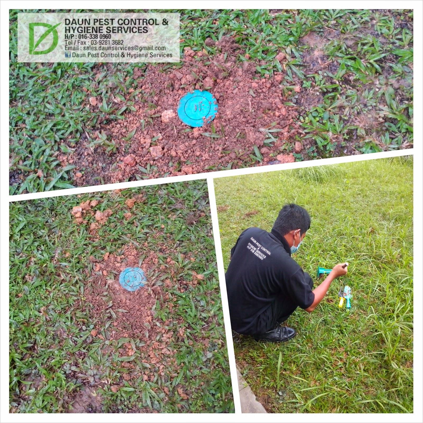 Daun Pest Control And Hygiene Services Termites Baiting