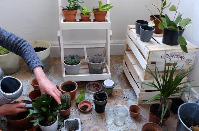 http://www.lilikus.be/2017/06/mes-plantes-cheries-mode-demploi.html