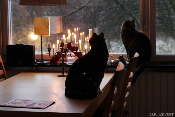 aliciaisvert, alicia sivert, alicia sivertsson, katt, katter, cat, cats, jul, advent, morgon, gryning, dawn, morning, christmas