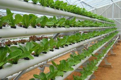 Kriteria dan Tips Pemberian Air pada Tumbuhan Hidroponik