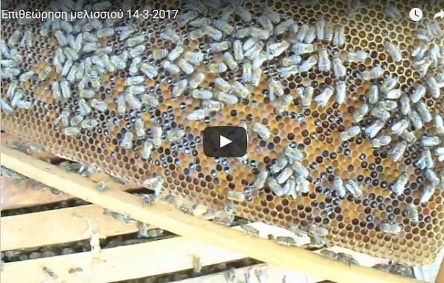 Επιθεώρηση μελισσιού 14-3-2017 video
