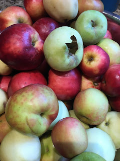 Photo of assorted Washington State apples grow from Spirit Wild Farm in Carnation, WA. Includes yellow and red apples.. https://trimazing.com/
