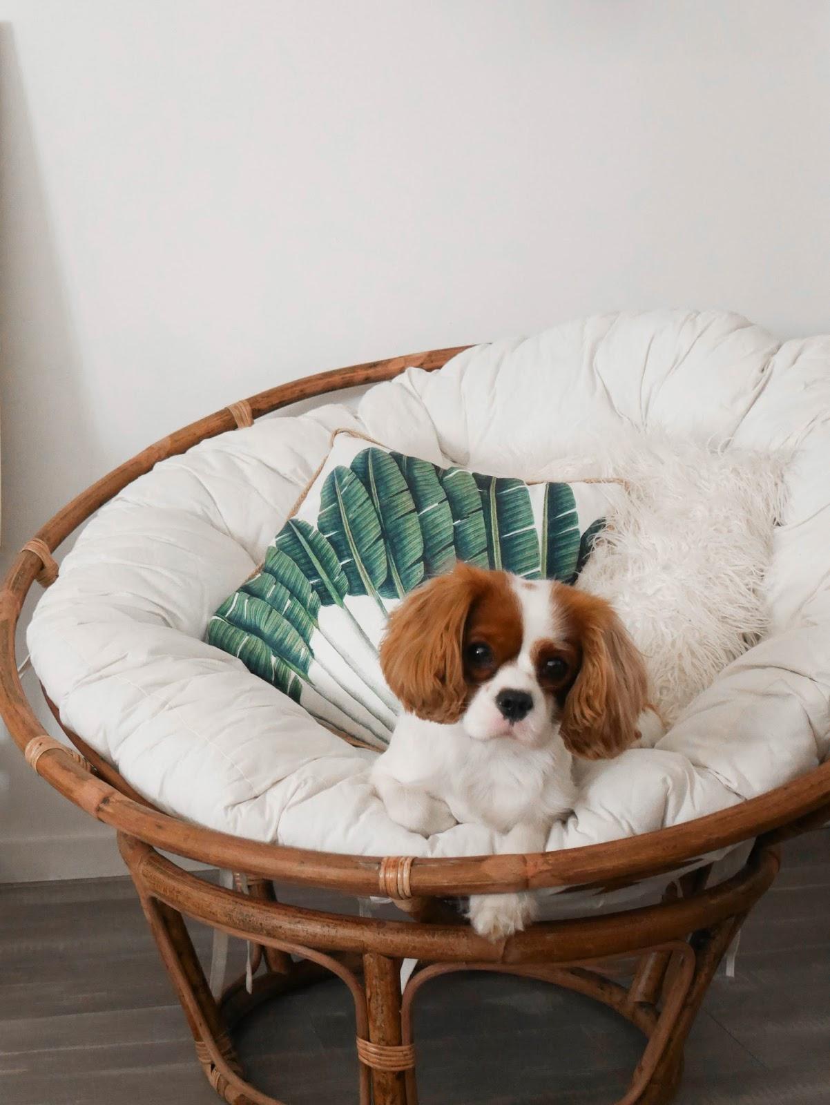 fauteuil casa rotin parisgrenoble