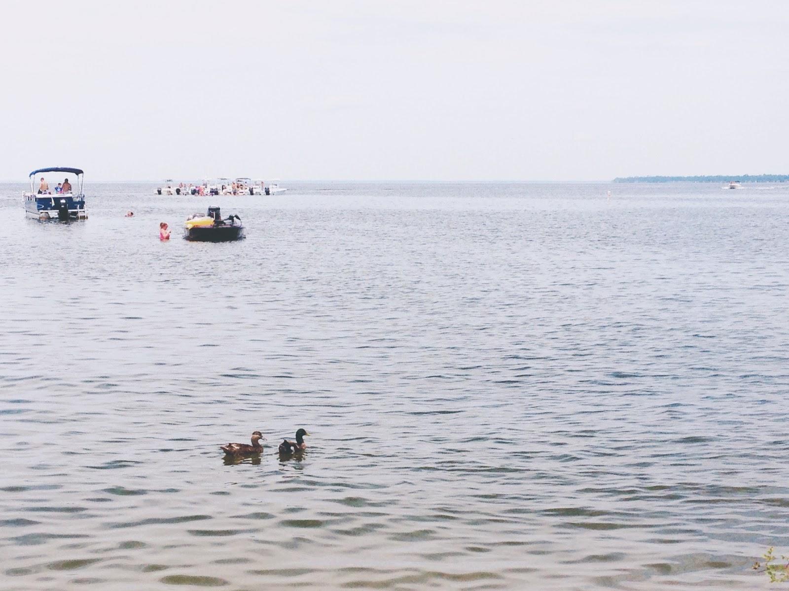 Pair of ducks at Lake Moultrie, Moncks Corner (Short Stay)