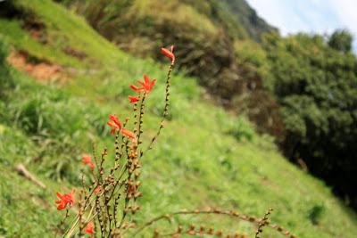 Heliconias en Monteverde