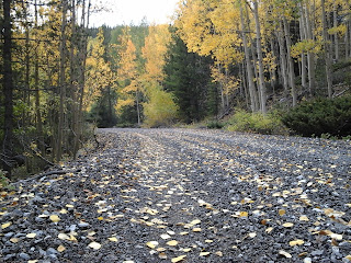 View of the fall leaves on the old railroad grade in Monarch, Colorado.
