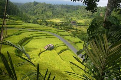 Sumber Daya Alam Pulau Bali dan Nusa Tenggara