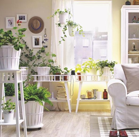 Las plantas te dan sensación de tranquilidad y positivismo