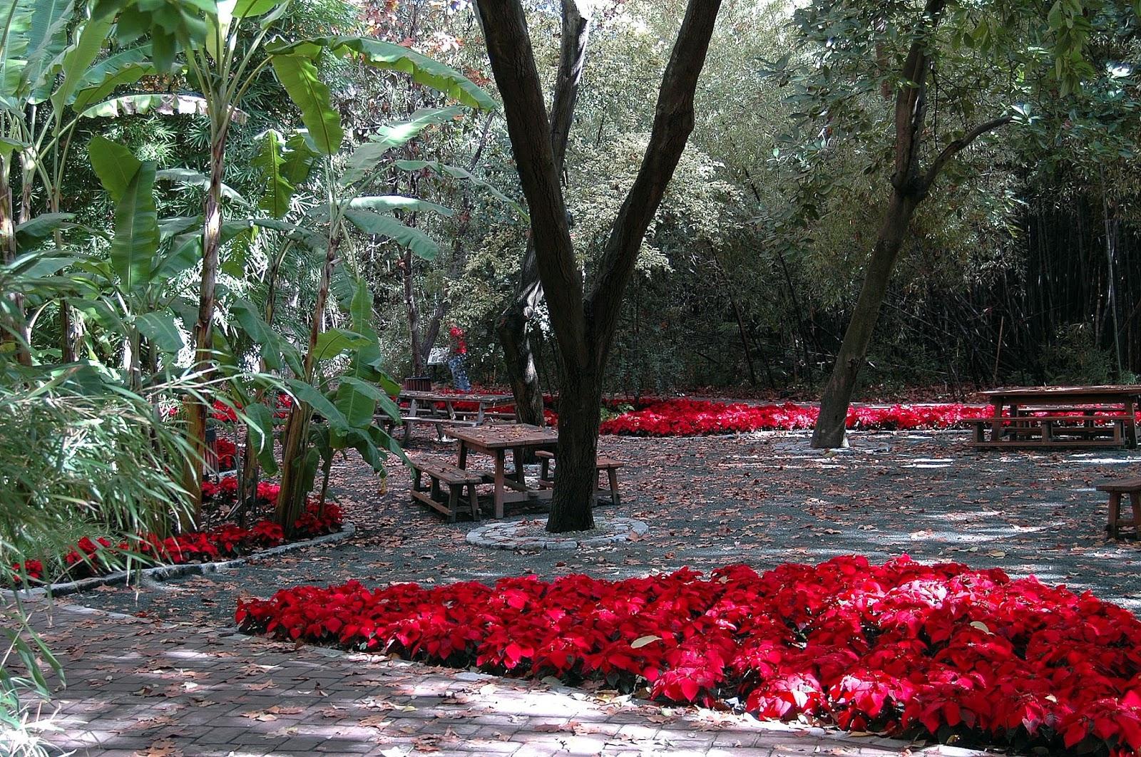 Floraciones en m laga y m s oto o en el jard n bot nico for Jardin botanico el ejido