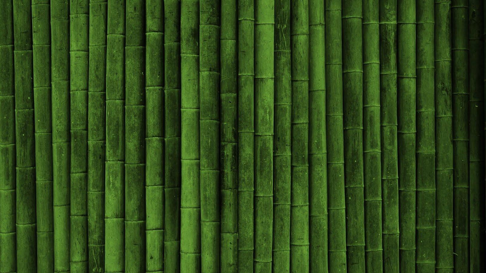 HD Bamboo Plant Wallpapers | Desktop Wallpapers
