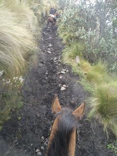 Ecuador, paramó, riitta reissaa, volcano